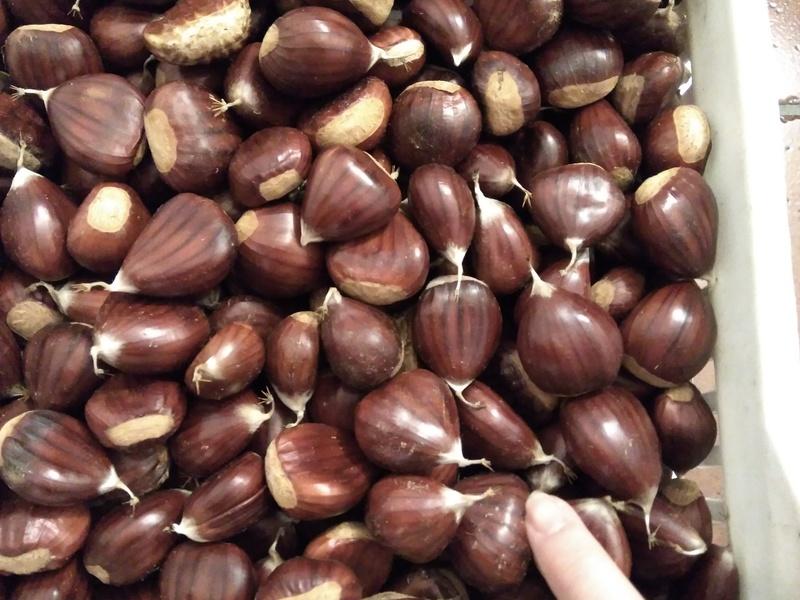 Sachar - Mercado agrícola